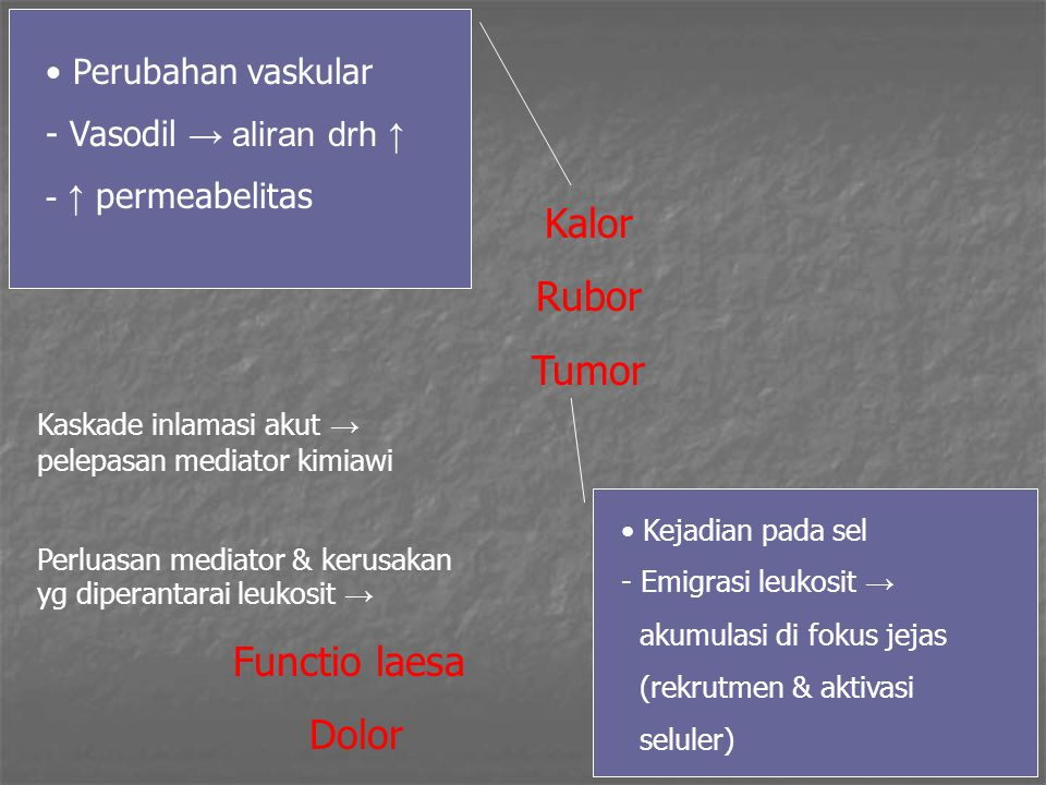 Kalor Rubor Tumor Dolor Perubahan vaskular Vasodil → aliran drh ↑