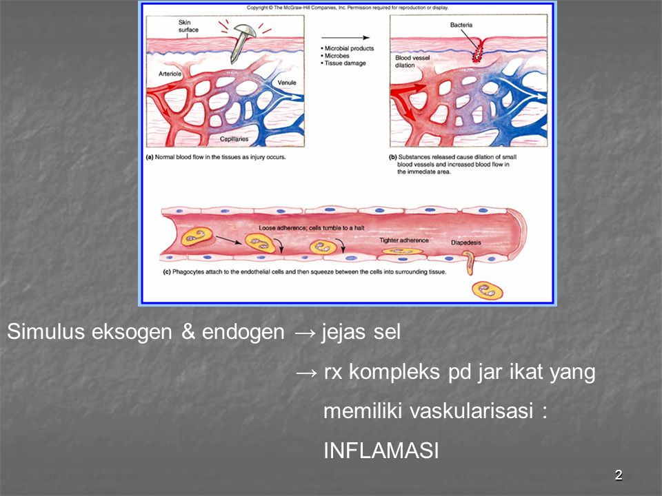 Simulus eksogen & endogen → jejas sel
