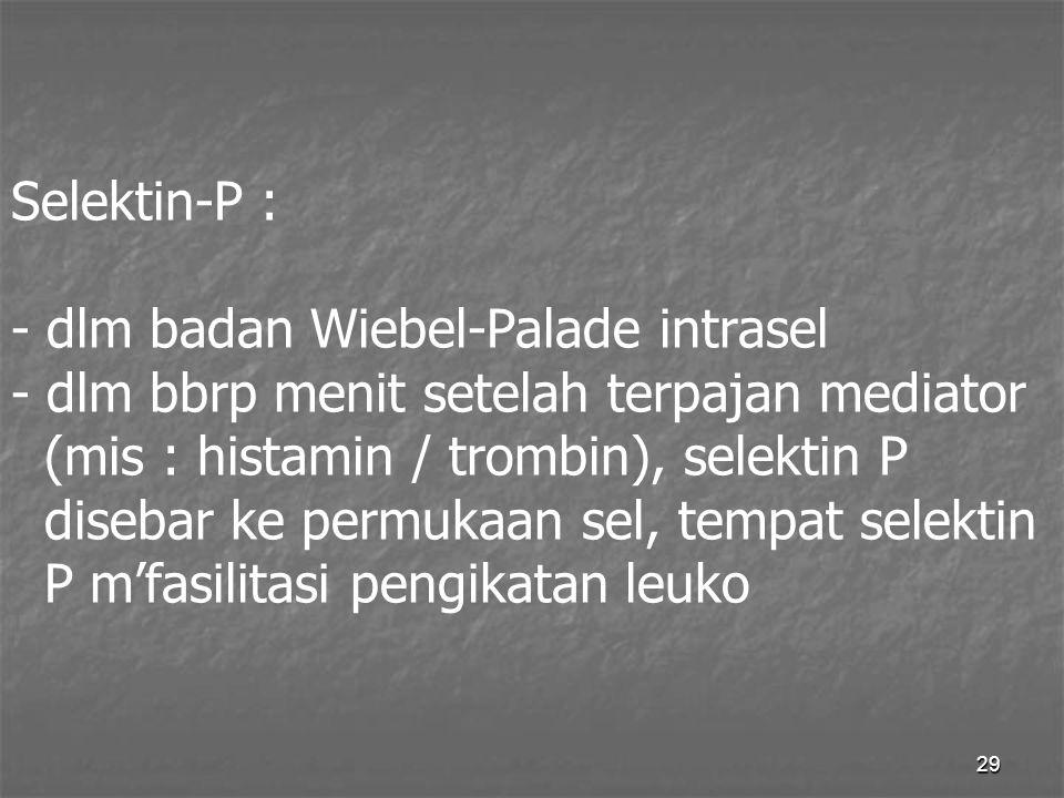 Selektin-P : - dlm badan Wiebel-Palade intrasel - dlm bbrp menit setelah terpajan mediator (mis : histamin / trombin), selektin P disebar ke permukaan sel, tempat selektin P m'fasilitasi pengikatan leuko