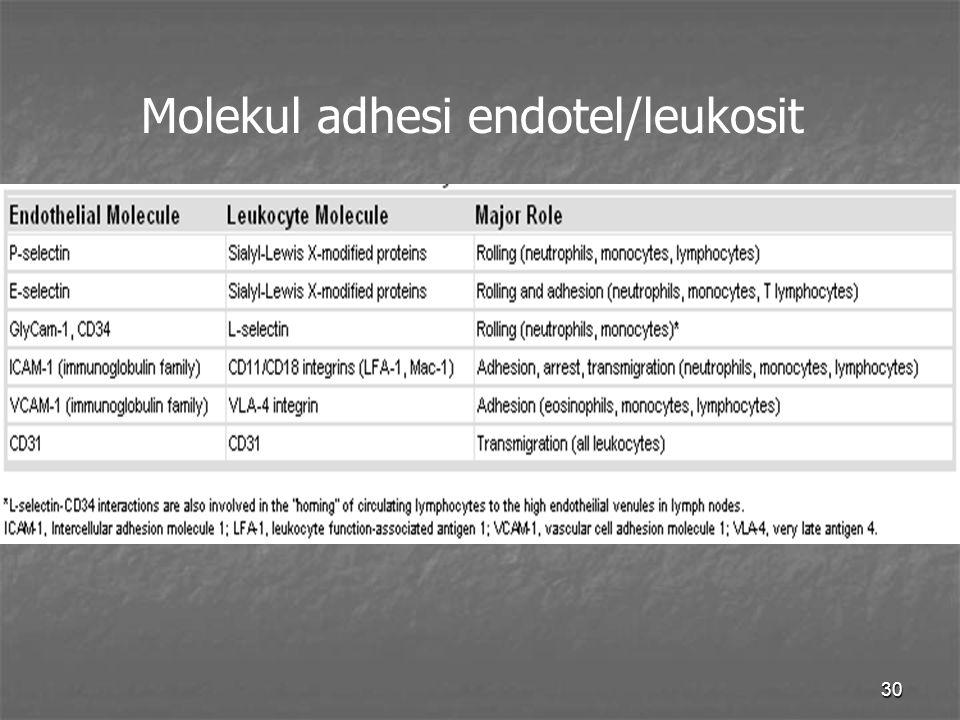 Molekul adhesi endotel/leukosit