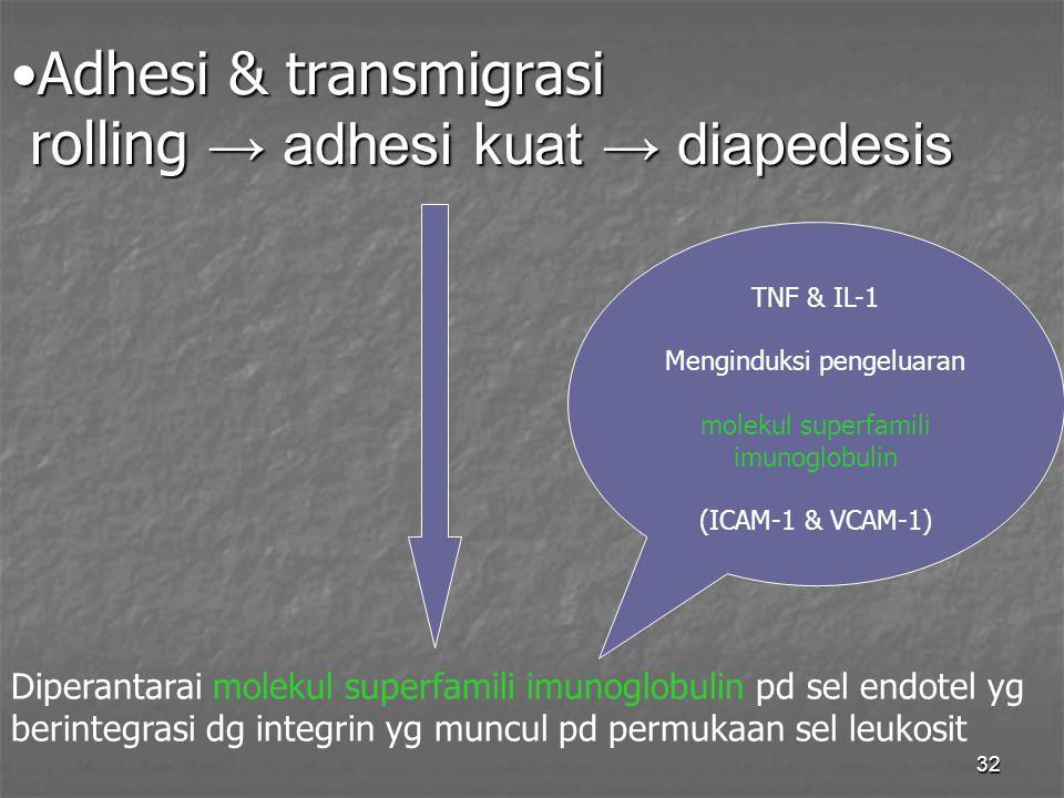 Adhesi & transmigrasi rolling → adhesi kuat → diapedesis
