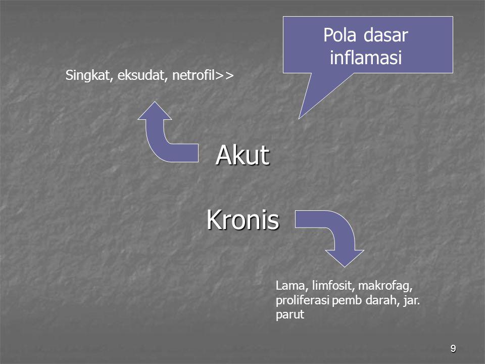 Akut Kronis Pola dasar inflamasi Singkat, eksudat, netrofil>>