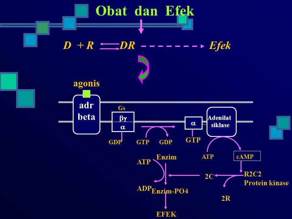Obat dan Efek D + R DR Efek agonis adr beta    GTP Enzim ATP ADP