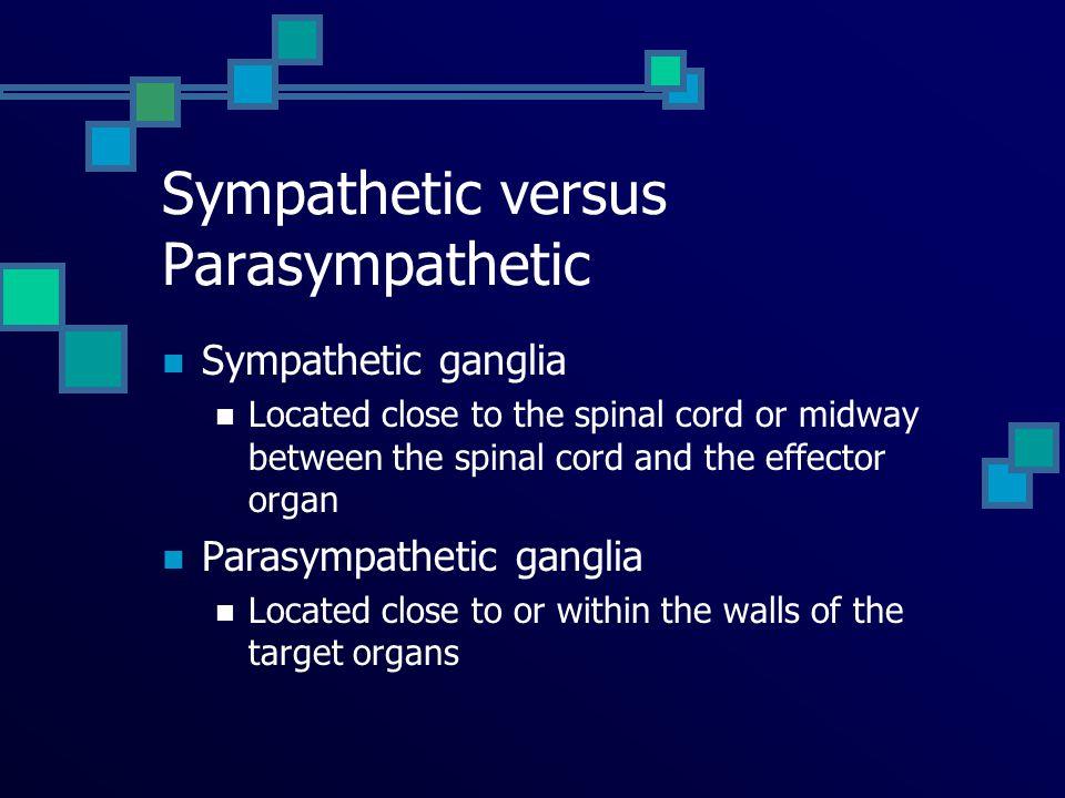Sympathetic versus Parasympathetic
