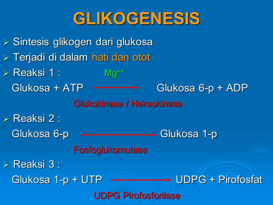 GLIKOGENESIS Sintesis glikogen dari glukosa
