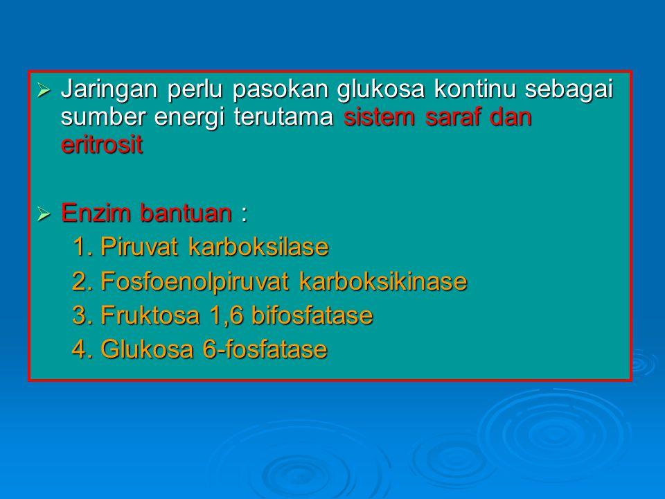 Jaringan perlu pasokan glukosa kontinu sebagai sumber energi terutama sistem saraf dan eritrosit