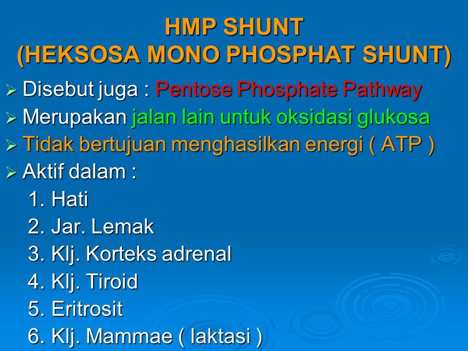 HMP SHUNT (HEKSOSA MONO PHOSPHAT SHUNT)