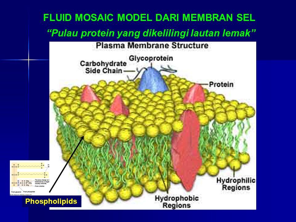 FLUID MOSAIC MODEL DARI MEMBRAN SEL