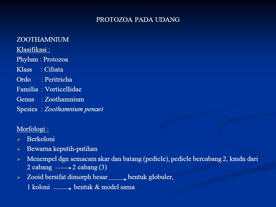 PROTOZOA PADA UDANG ZOOTHAMNIUM. Klasifikasi : Phylum : Protozoa. Klass : Ciliata. Ordo : Peritricha.