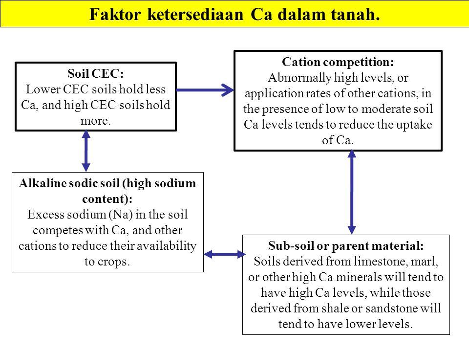 Faktor ketersediaan Ca dalam tanah.