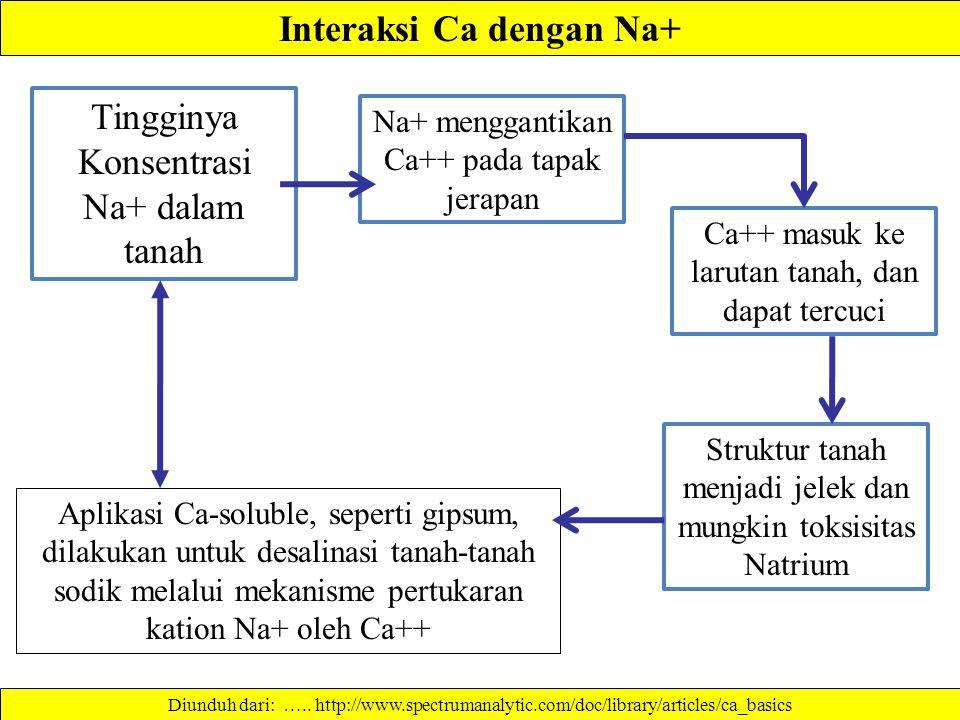 Interaksi Ca dengan Na+