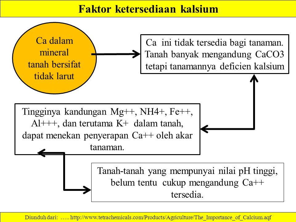 Faktor ketersediaan kalsium