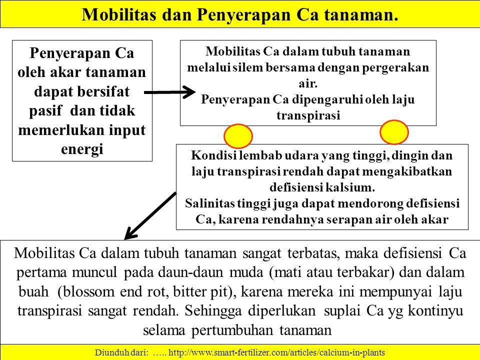 Mobilitas dan Penyerapan Ca tanaman.