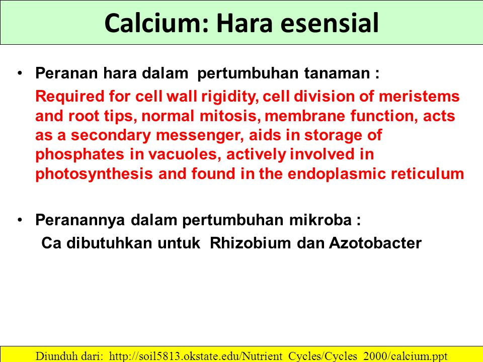Calcium: Hara esensial