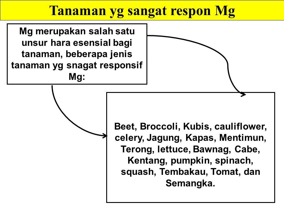 Tanaman yg sangat respon Mg