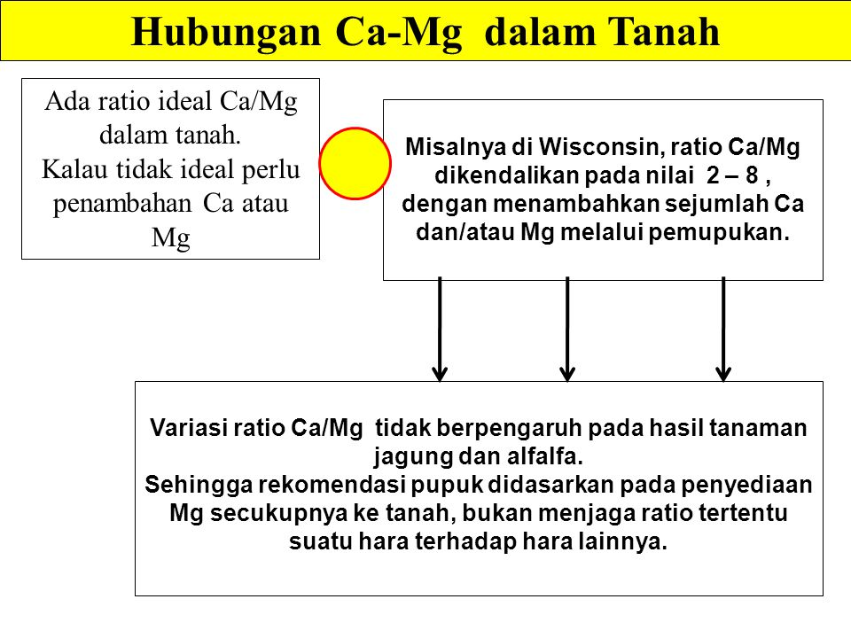 Hubungan Ca-Mg dalam Tanah