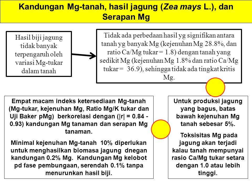 Kandungan Mg-tanah, hasil jagung (Zea mays L.), dan Serapan Mg