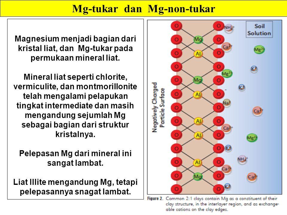 Mg-tukar dan Mg-non-tukar