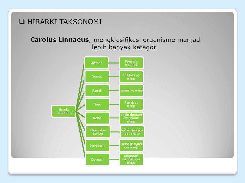 Hirarki Taksonomi Carolus Linnaeus, mengklasifikasi organisme menjadi lebih banyak katagori. Hirarki Taksonomi.