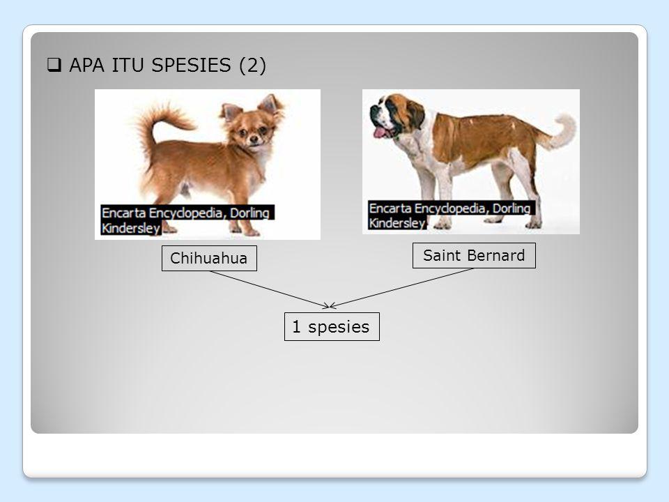 Apa itu Spesies (2) Chihuahua Saint Bernard 1 spesies