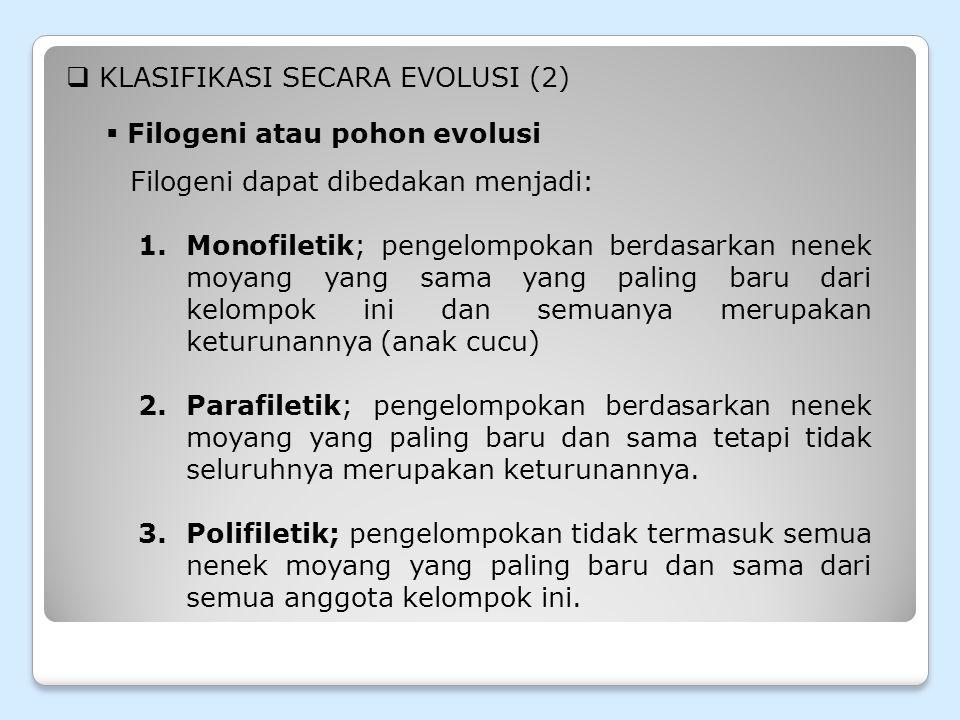 KLASIFIKASI SECARA EVOLUSI (2)