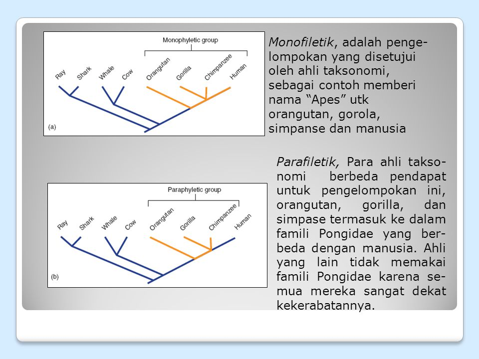 Monofiletik, adalah penge-lompokan yang disetujui oleh ahli taksonomi, sebagai contoh memberi nama Apes utk orangutan, gorola, simpanse dan manusia