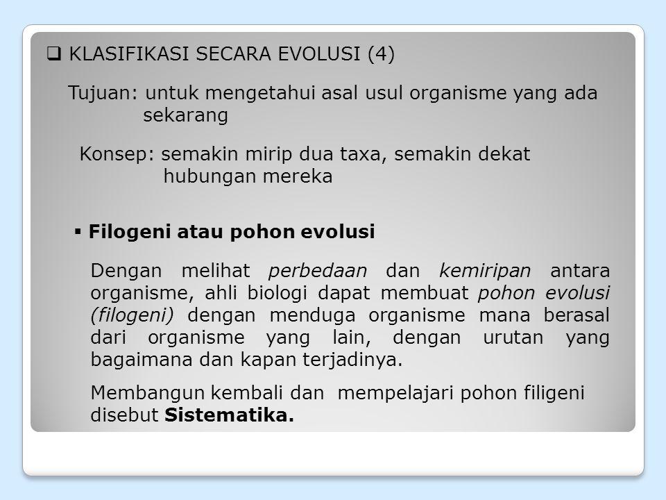 KLASIFIKASI SECARA EVOLUSI (4)