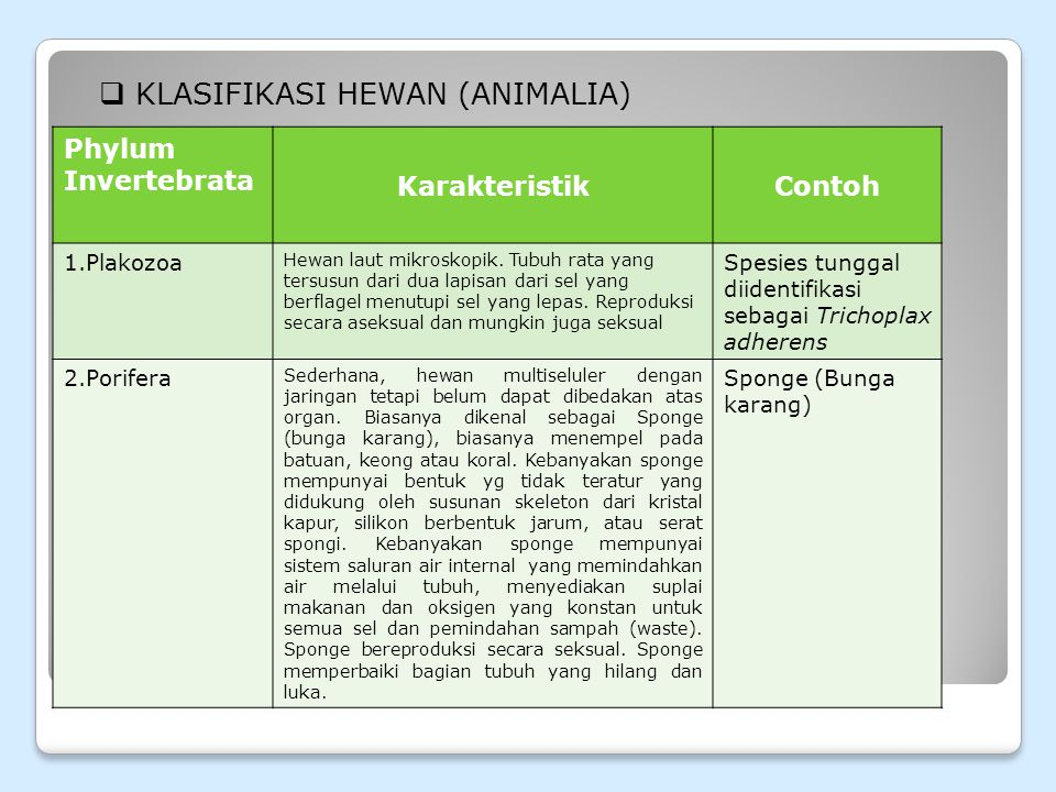 KLASIFIKASI HEWAN (ANIMALIA)