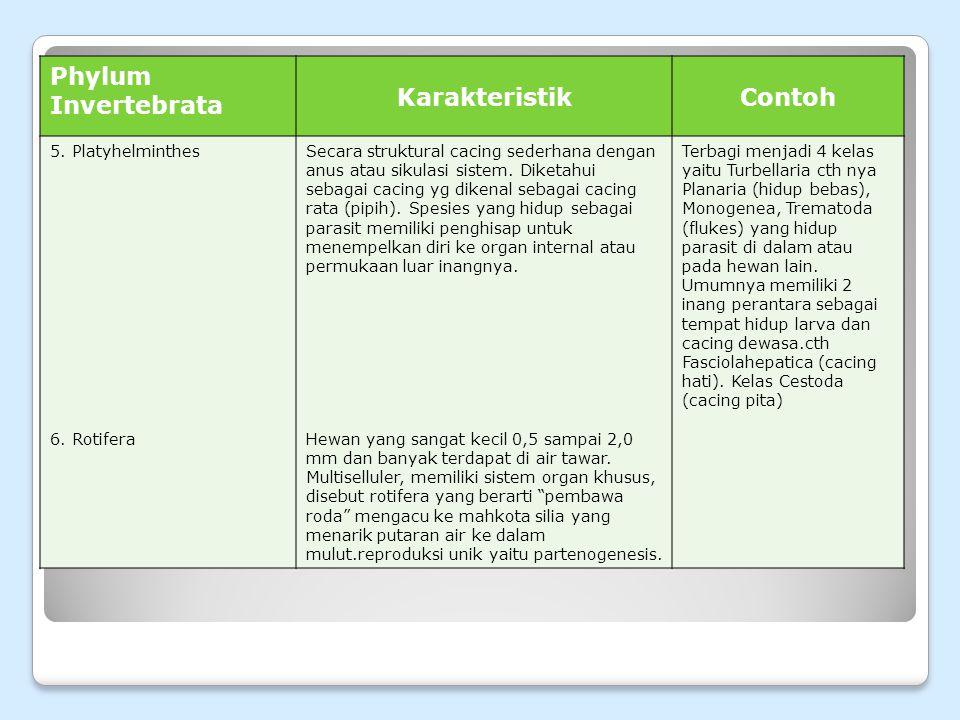 Phylum Invertebrata Karakteristik Contoh 5. Platyhelminthes