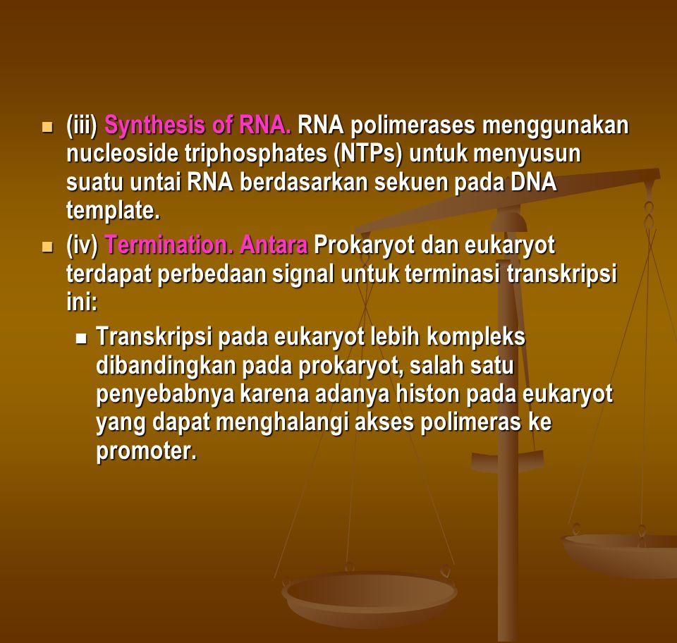(iii) Synthesis of RNA. RNA polimerases menggunakan nucleoside triphosphates (NTPs) untuk menyusun suatu untai RNA berdasarkan sekuen pada DNA template.