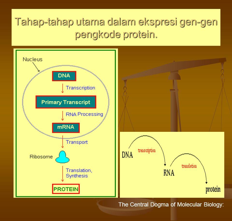 Tahap-tahap utama dalam ekspresi gen-gen pengkode protein.