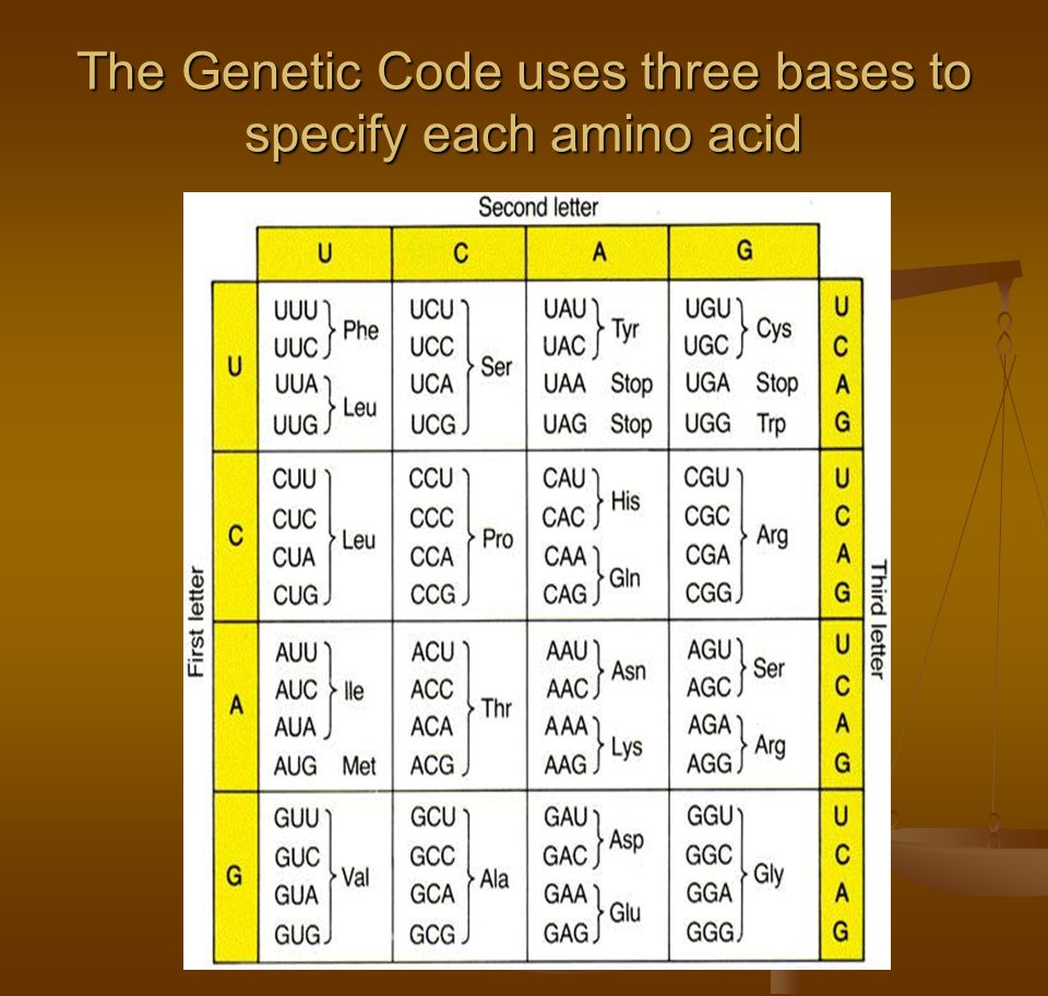 The Genetic Code uses three bases to specify each amino acid