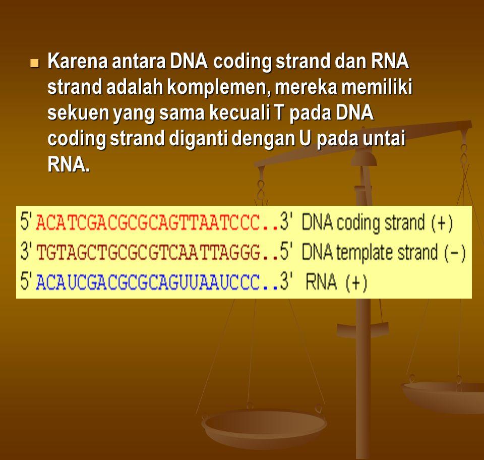 Karena antara DNA coding strand dan RNA strand adalah komplemen, mereka memiliki sekuen yang sama kecuali T pada DNA coding strand diganti dengan U pada untai RNA.