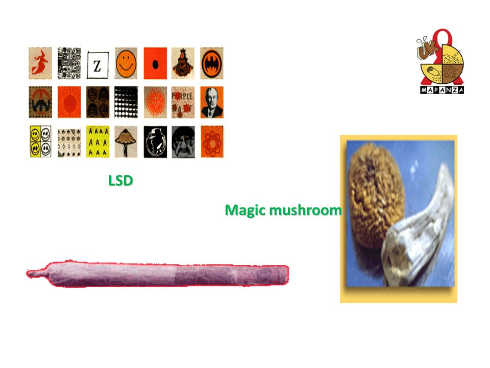 LSD Magic mushroom uk_mapanza Unair