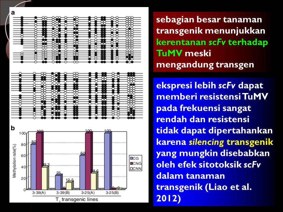 sebagian besar tanaman transgenik menunjukkan kerentanan scFv terhadap TuMV meski mengandung transgen