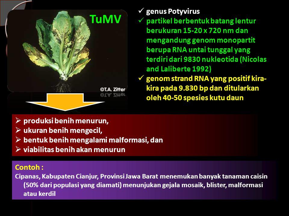 genus Potyvirus