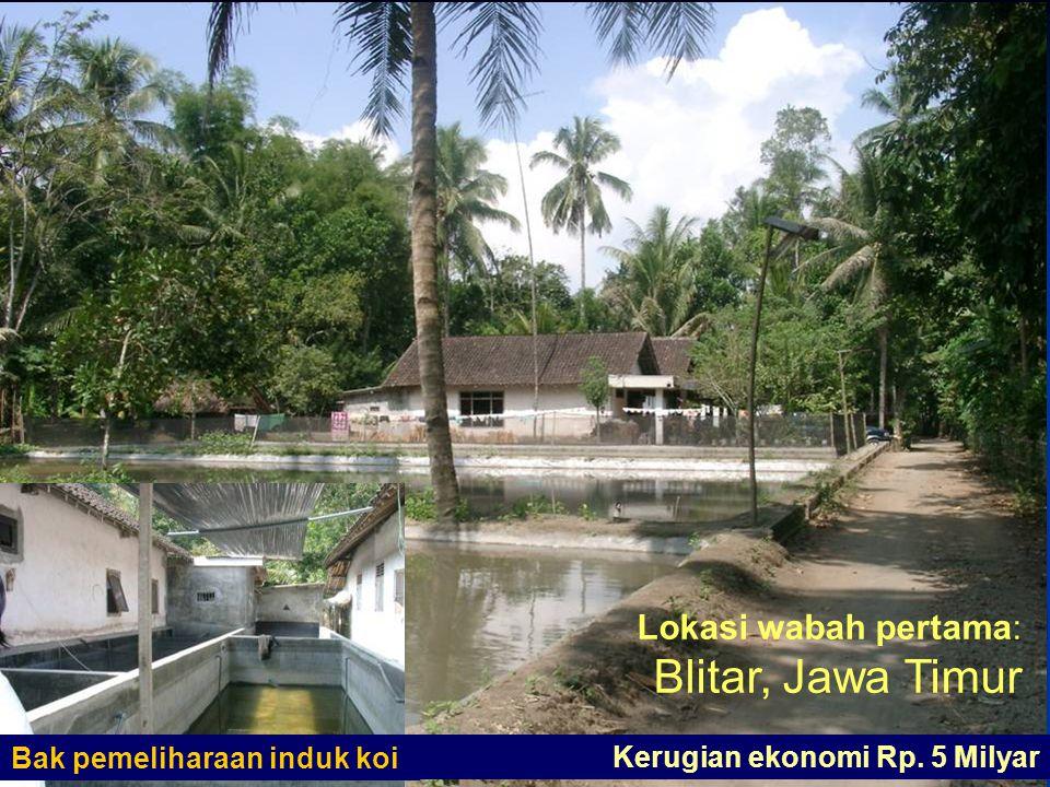 Lokasi wabah pertama: Blitar, Jawa Timur