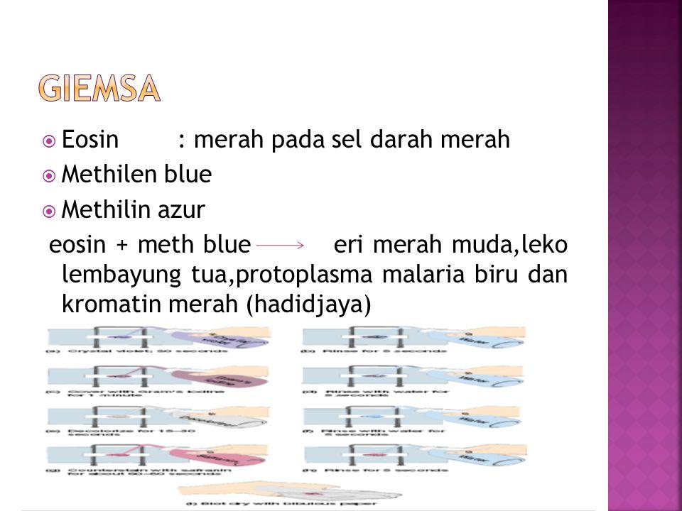 giemsa Eosin : merah pada sel darah merah Methilen blue Methilin azur