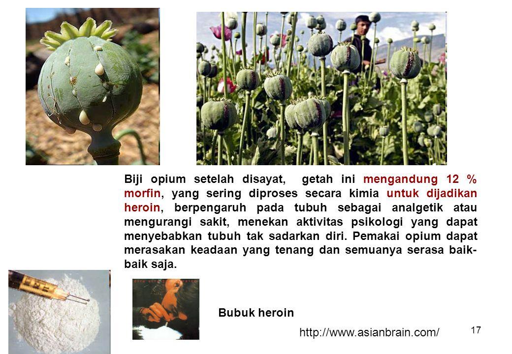 Biji opium setelah disayat, getah ini mengandung 12 % morfin, yang sering diproses secara kimia untuk dijadikan heroin, berpengaruh pada tubuh sebagai analgetik atau mengurangi sakit, menekan aktivitas psikologi yang dapat menyebabkan tubuh tak sadarkan diri. Pemakai opium dapat merasakan keadaan yang tenang dan semuanya serasa baik-baik saja.