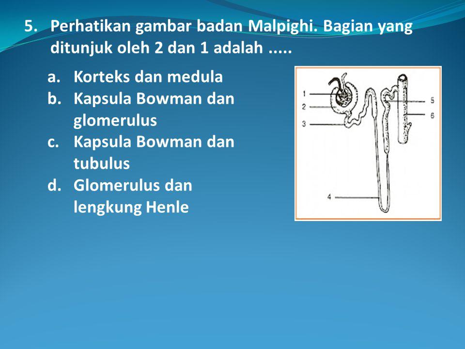 5. Perhatikan gambar badan Malpighi