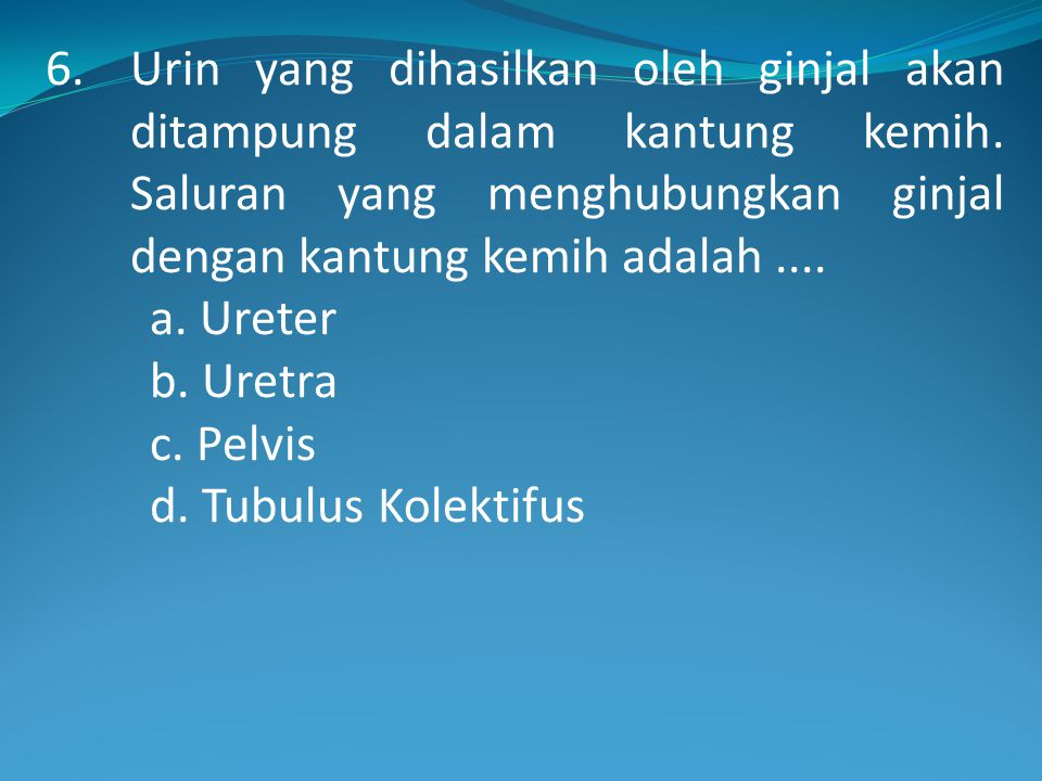 6. Urin yang dihasilkan oleh ginjal akan ditampung dalam kantung kemih