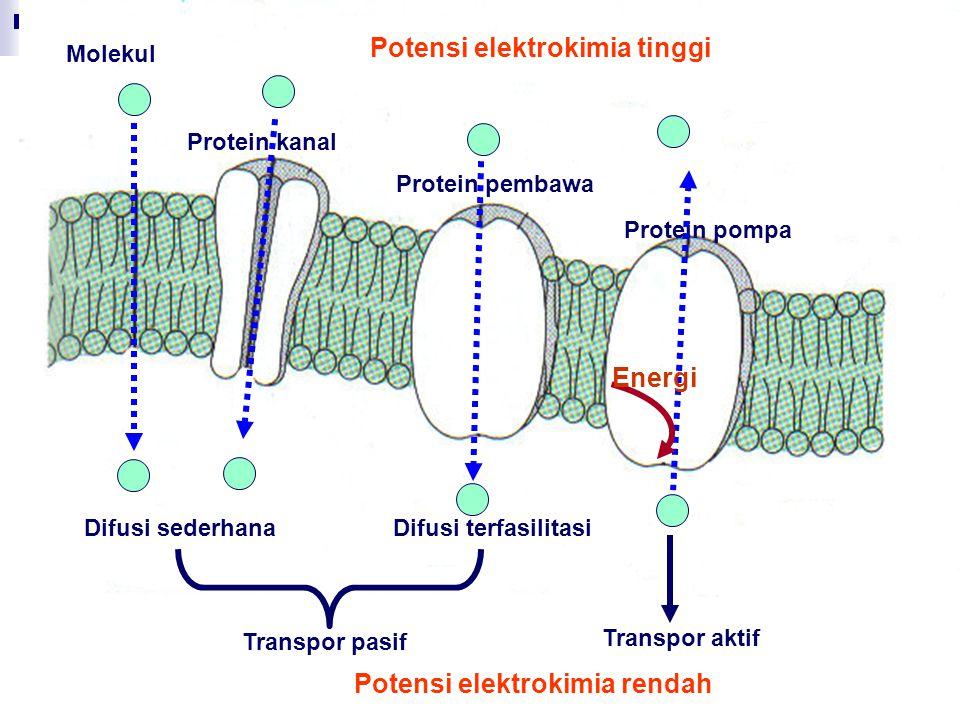 Potensi elektrokimia tinggi