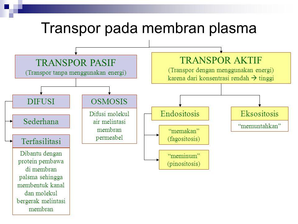 Transpor pada membran plasma