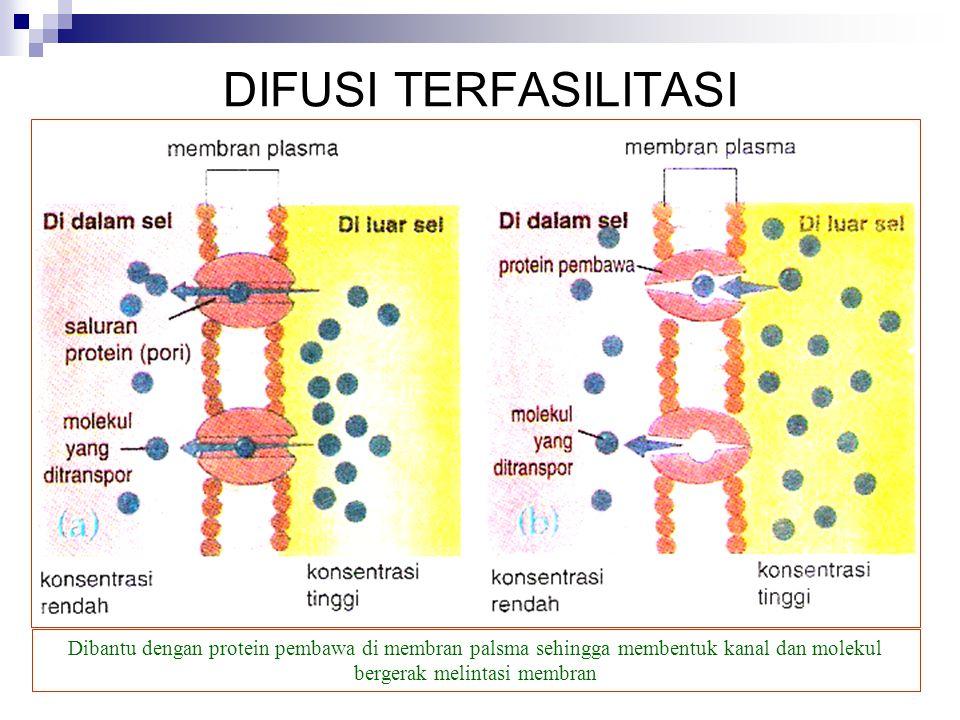 DIFUSI TERFASILITASI Dibantu dengan protein pembawa di membran palsma sehingga membentuk kanal dan molekul bergerak melintasi membran.