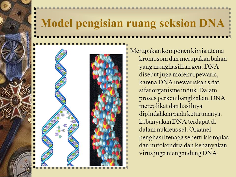 Model pengisian ruang seksion DNA