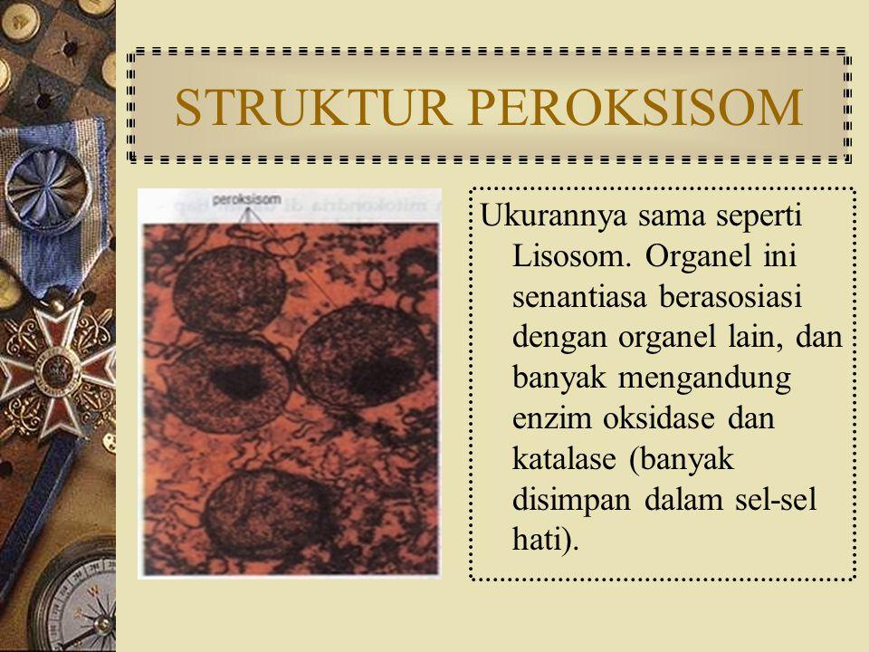 STRUKTUR PEROKSISOM