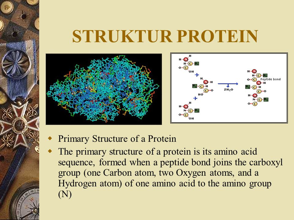 STRUKTUR PROTEIN Primary Structure of a Protein
