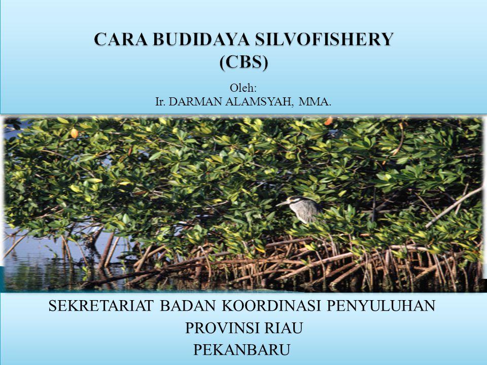 CARA BUDIDAYA SILVOFISHERY (CBS)