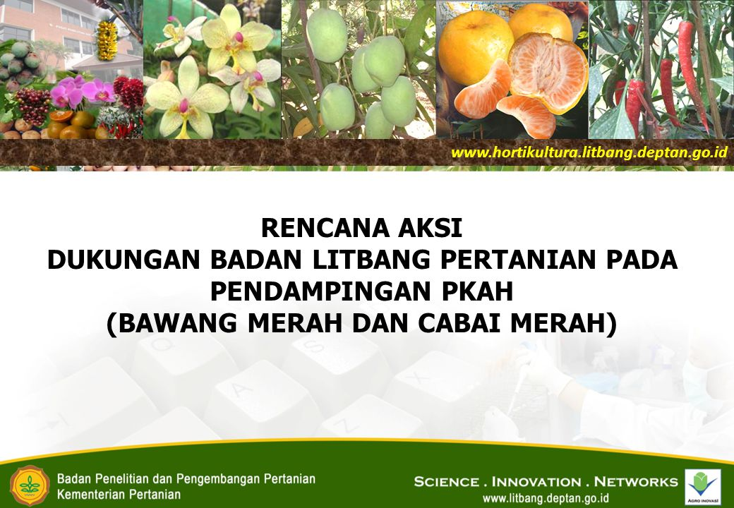www.hortikultura.litbang.deptan.go.id RENCANA AKSI DUKUNGAN BADAN LITBANG PERTANIAN PADA PENDAMPINGAN PKAH (BAWANG MERAH DAN CABAI MERAH)