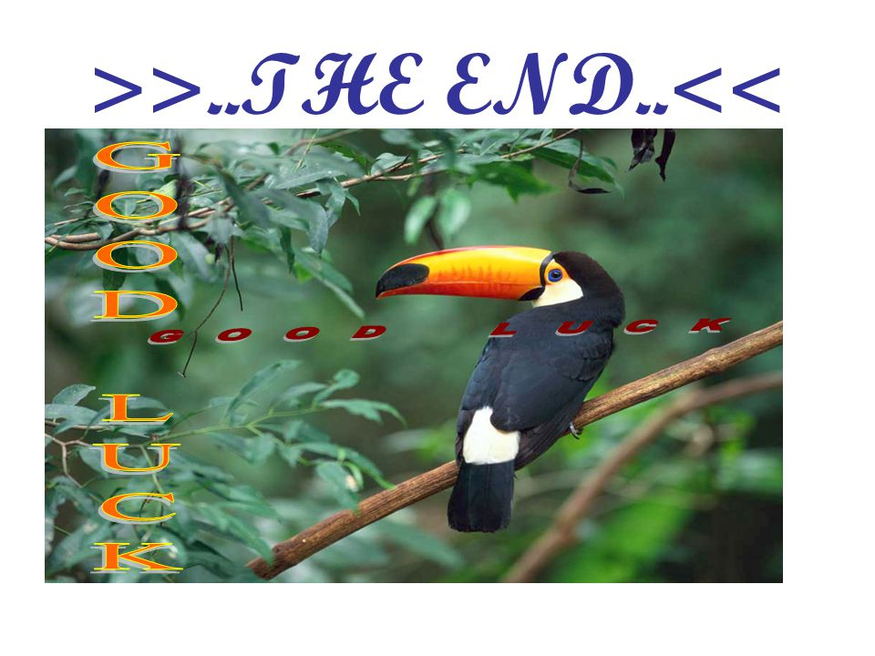 >>..THE END..<<